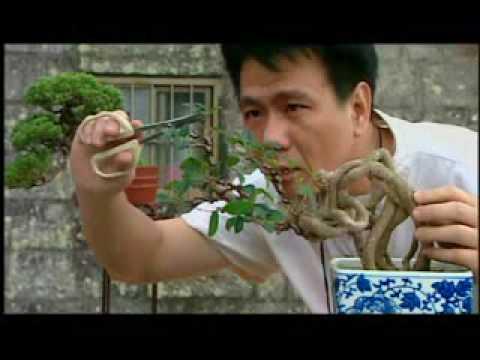 宏觀9810(國語) 中華文化 盆景藝術.wmv
