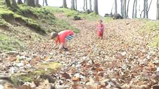 Harry and Charlie - Running in the Leaves