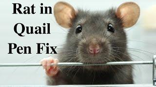 Rat Fix in Quail Pen