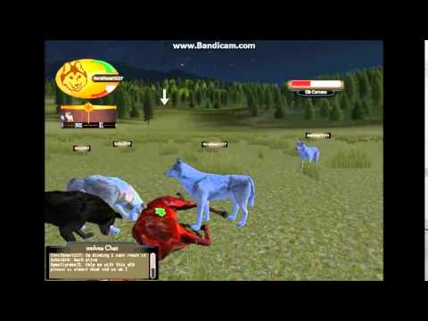 WolfQuest ~Multiplayer~ Wolf Life -Best Pack Eve!- - YouTube - photo#9