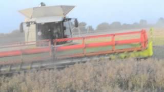 Żniwa 2012 rzepak - Harvest 2012: Colza [ Claas lexion 600,580, John Deere, Hawe ]