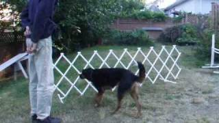 Introducing A Dog To Ring Gates: A Desensitization & Conditioning Process Using Clicker Training