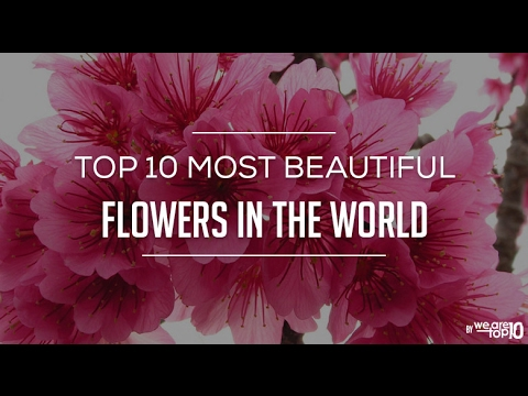 Top 10 Most Beautiful Flower In The World. World Best ...