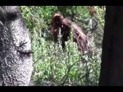 Sasquatch/Bigfoot Creature Discovered on Camera 2017 [Real ...