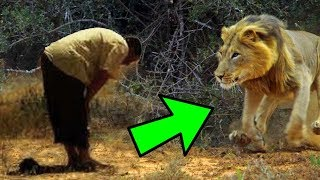 The Man Who Makes The Lion Prayer See What He's Doing! When you follow, you will produce.