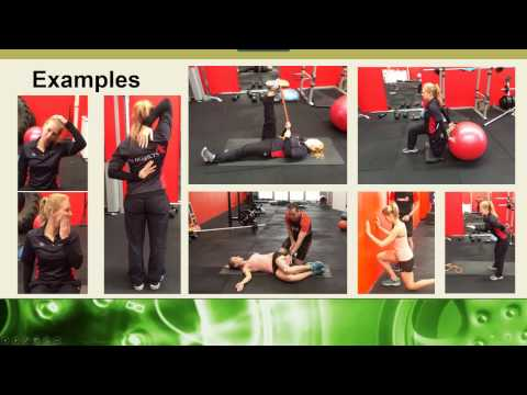 Stretching & Flexibility Everything You Need To Know