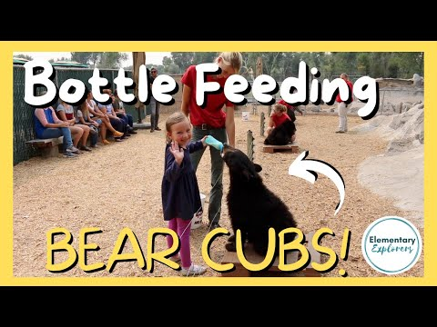 Bottle Feeding Bear Cubs & A Bear Licks our Camper! - Adventures at Yellowstone Bear World