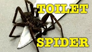 Large Spider Toilet Fright The Quick & The Dead