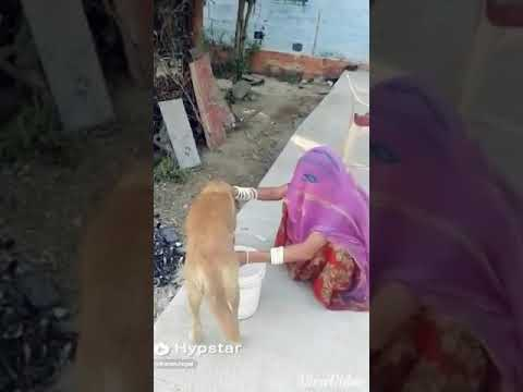 Desi milk.. thumbnail