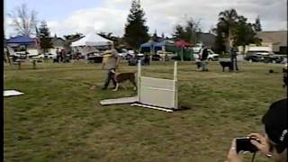 Dog Olympics,  Bakersfield Obedience Training Club