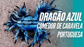 O Dragão azul e a alfabetização oceânica