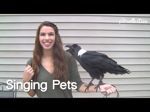 Singing Pets | The Pet Collective