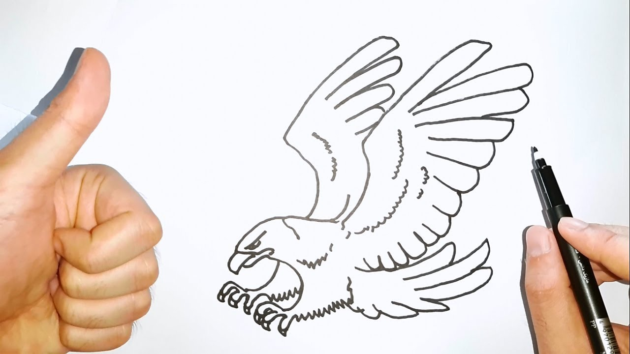 How To Draw Bald Eagle Cara Gambar Elang