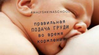 КАК ПРИЛОЖИТЬ ребенка к ГРУДИ? | Профилактика трещин сосков | Консультант по ГВ | Малышкина Школа