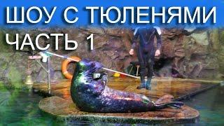 Шоу с тюленями /Тюлень Гоша качает пресс /Океанариум ТРК Планета Нептун Санкт-Петербург СПб Часть 1