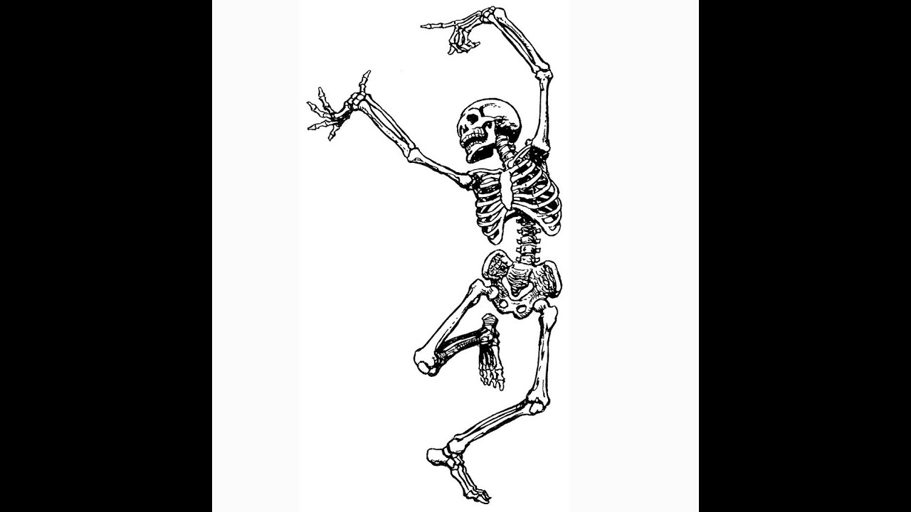 Bones And The Skeletal System Video For Kids Youtube