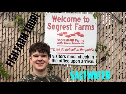 Segrest Fish Farm Tour (Saltwater)