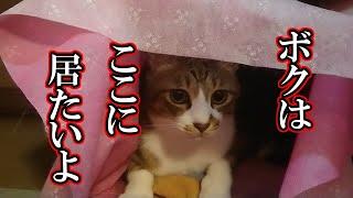 かわいい子猫が突然お家にやってきた-その時、先住猫達は・・・?!の、あの子猫は今?その後スペシャル20