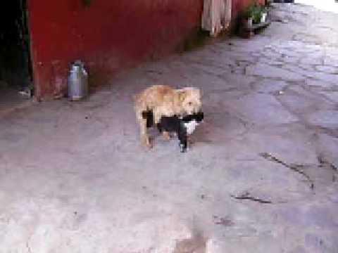 Mi perro y mi gato youtube - Imagenes de animales apareandose ...