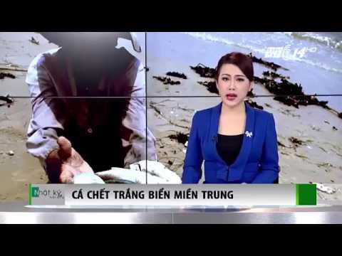 """Biển chết ở Vũng Áng: Nhạc chế """"Mời anh về thăm Hà Tĩnh""""."""