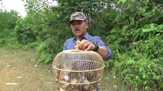 merelease burung hasil jebakan ke alam liar