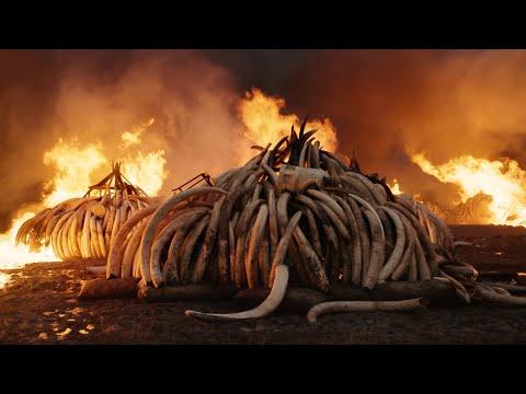 Kino Lorber Sets 'Anthropocene: The Human Epoch' Theatrical Run – Deadline