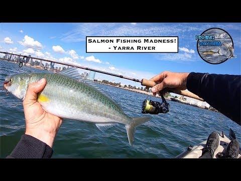 Salmon Fishing Madness! - Yarra River