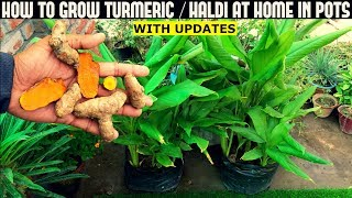 How To Grow Turmeric/Haldi In Pots (With Full Updates)