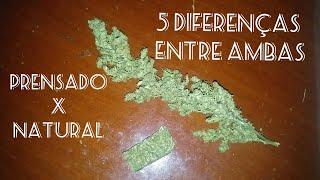 5 Diferenças Entre A Maconha Prensada E A Cultivada Naturalmente Em Casa #85 ( GORDÃO THC ) thumbnail