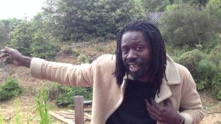 Reggae styles and genres explained - stevie culture