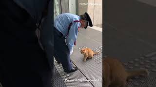 Two cats won't give up on trying to enter a Japanese Art Museum