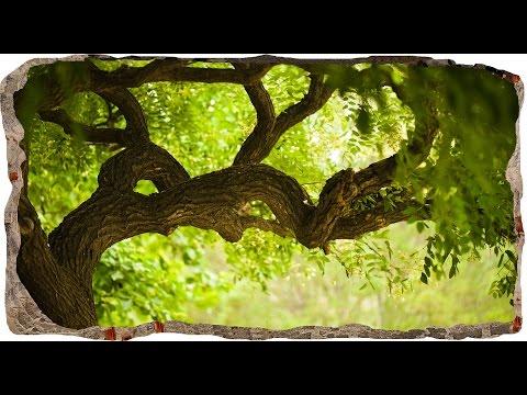 How to instal 3DMURAL007 Startonight 3D Mural Wall Art Window Green Tree