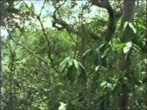 Web of the Spider Monkey