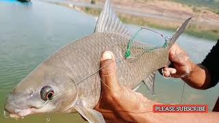 amazing-fish-catch-incredible-fishing