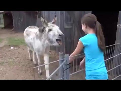 Olha a reação do burro ao ver menina que o criou