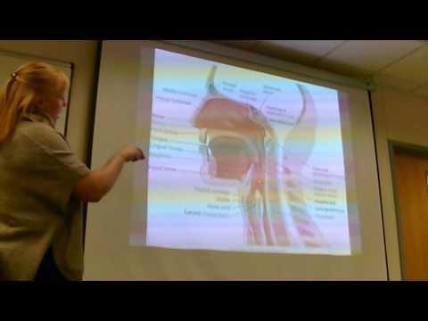 Respiratory System, Part 1 Anatomy
