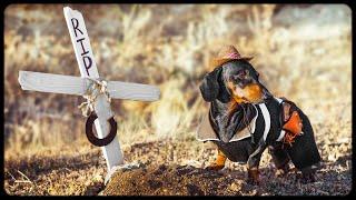 Goodbye old friend! Funny dachshund dog video!