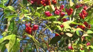 Herbstanfang (Beginning of autumn)