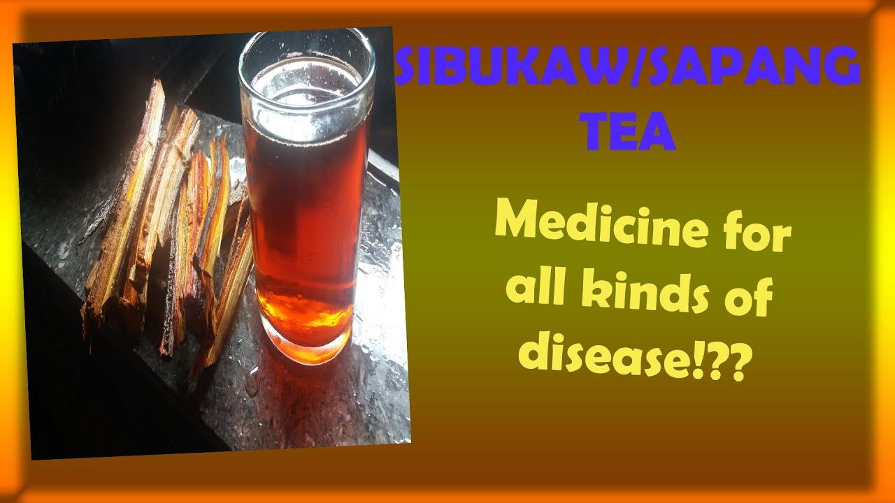 Sibukaw/sapang tea health benefits  Herbal medicine for all kinds of diseases #Herbalmedicine