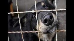 Maltrato animal se castigar con crcel en el DF
