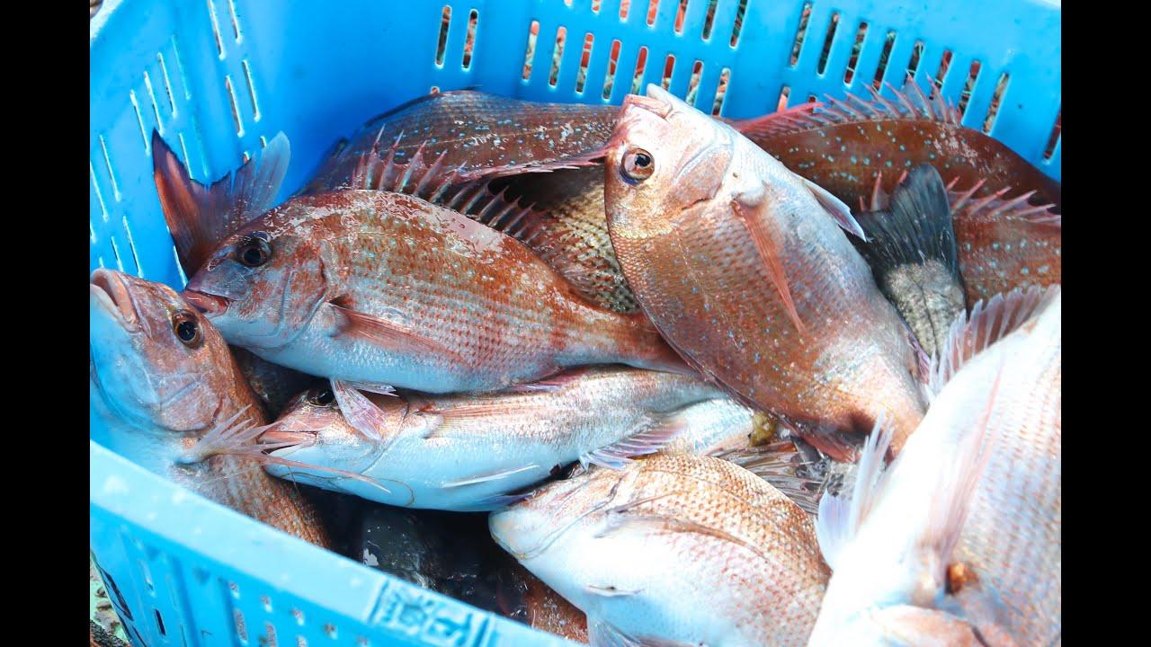 瀬戸内の伝統漁法「ごち網(鯛網)」漁師体験(倉敷市)【岡山観光WEB】