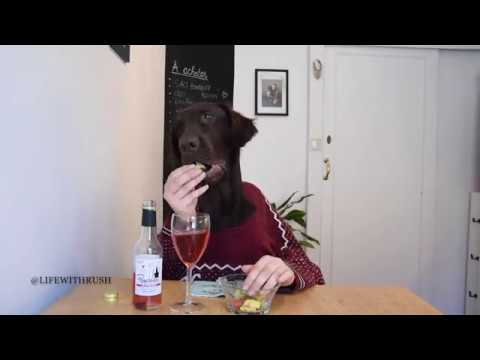 Flatcoated retriever funny eating and drinking
