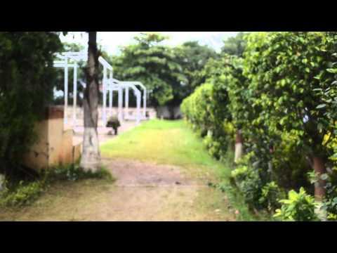 Delhi Public School, Navi Mumbai : A Short Film