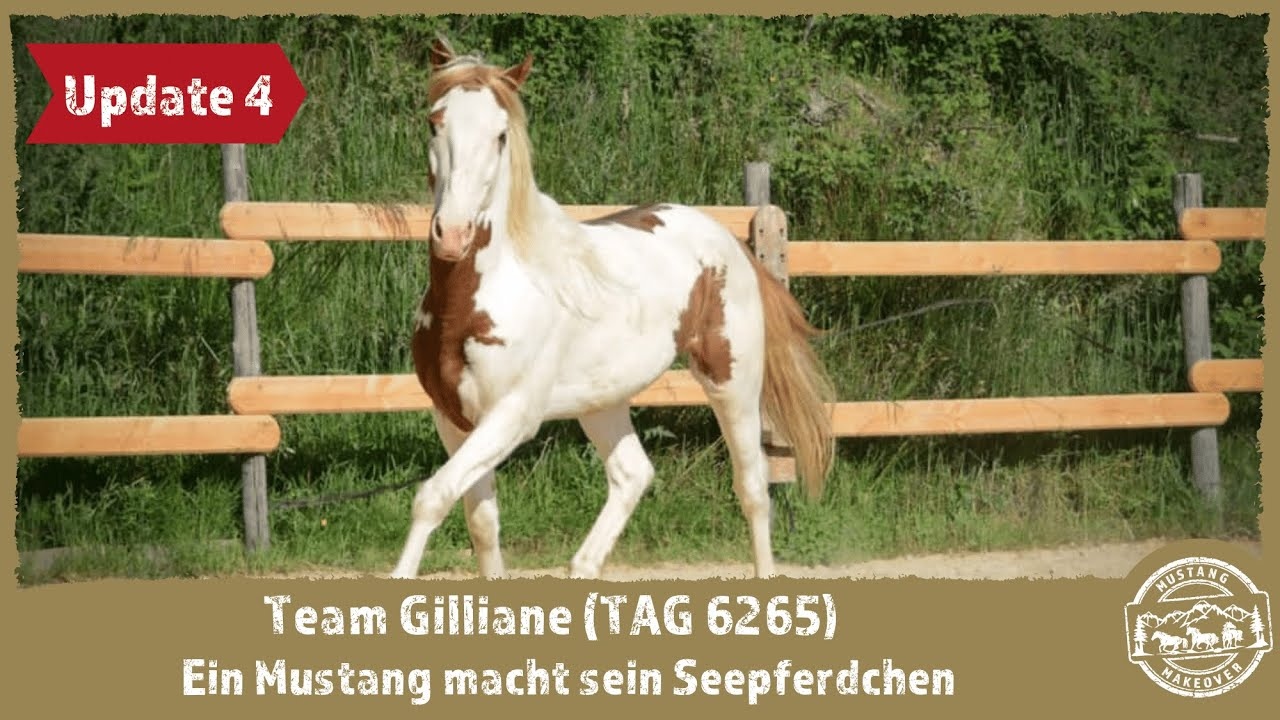 MUSTANG MAKEOVER 2021 - Team Gilliane (TAG 6265) - Update 4