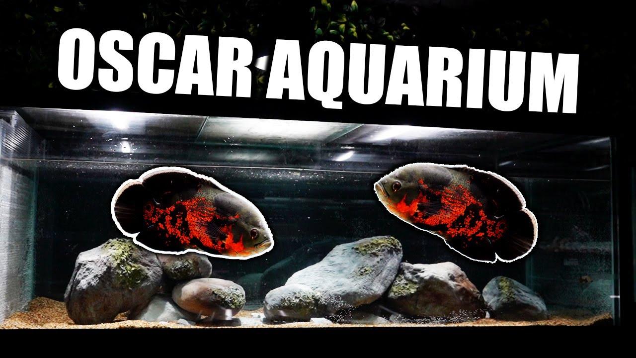 Download The ultimate oscar fish aquarium!