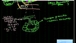 Pancreatic Physiology & Pathophysiology