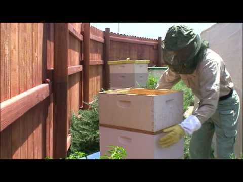 PureSpiritBeeYard - Third Inspection - Arizona Bees
