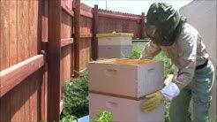 PureSpiritBeeYard - Third Inspection - Arizona Bees