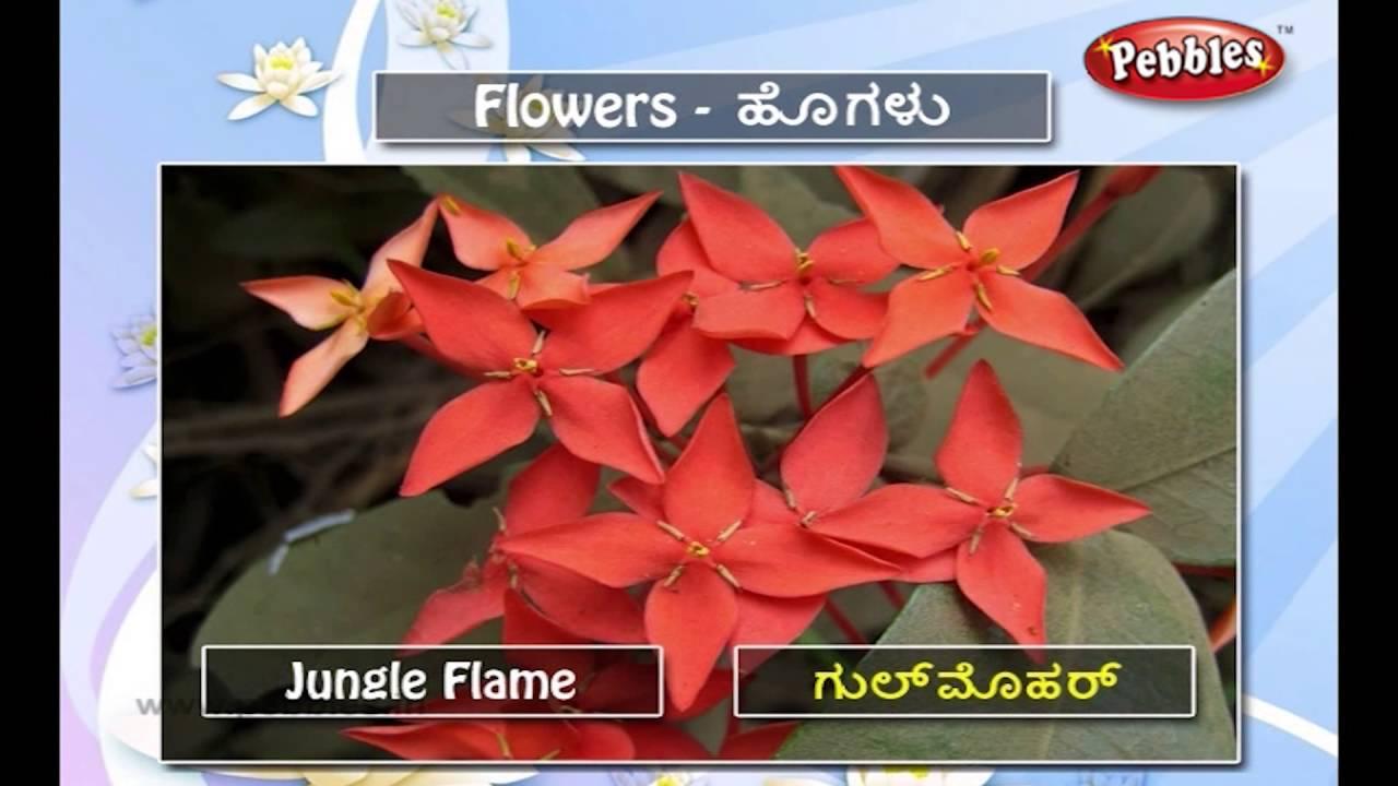 Speak Kannada Through English