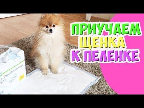 Как приучить щенка какать на пеленку